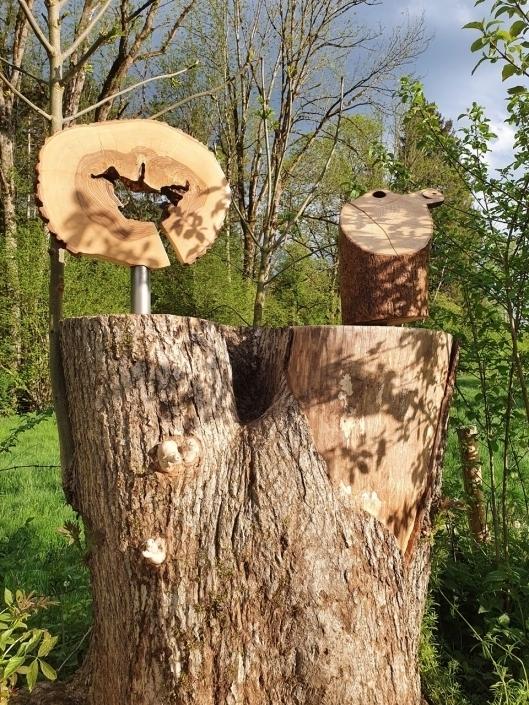 Mein Freund der Baum II und seine Baumtierchen